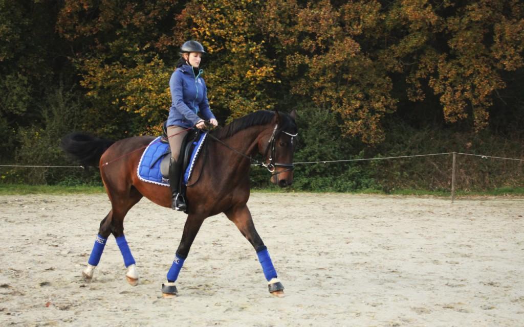 """Oldenburger in KAVAJU-Sports in """"magic blue"""""""